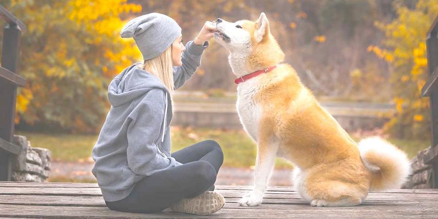 Akita training
