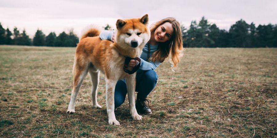 Akita Training For Your Best Friend