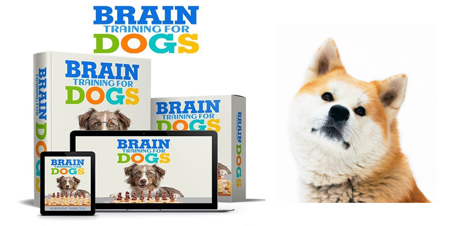 Brain Training for Akita