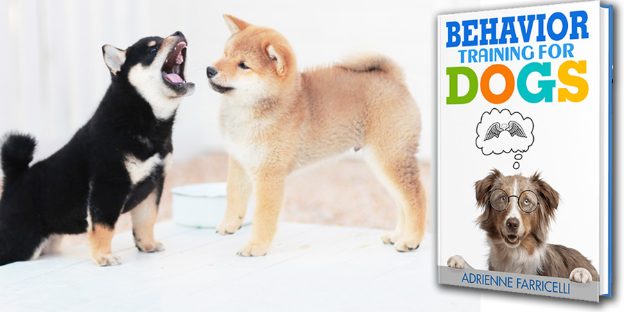 Brain Training for Akita Dog