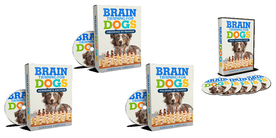 Brain Training For Akita Dogs